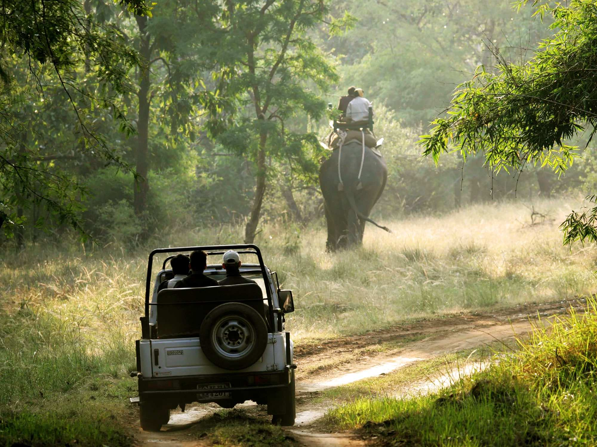 10 Best Offbeat Jungle Safaris of India