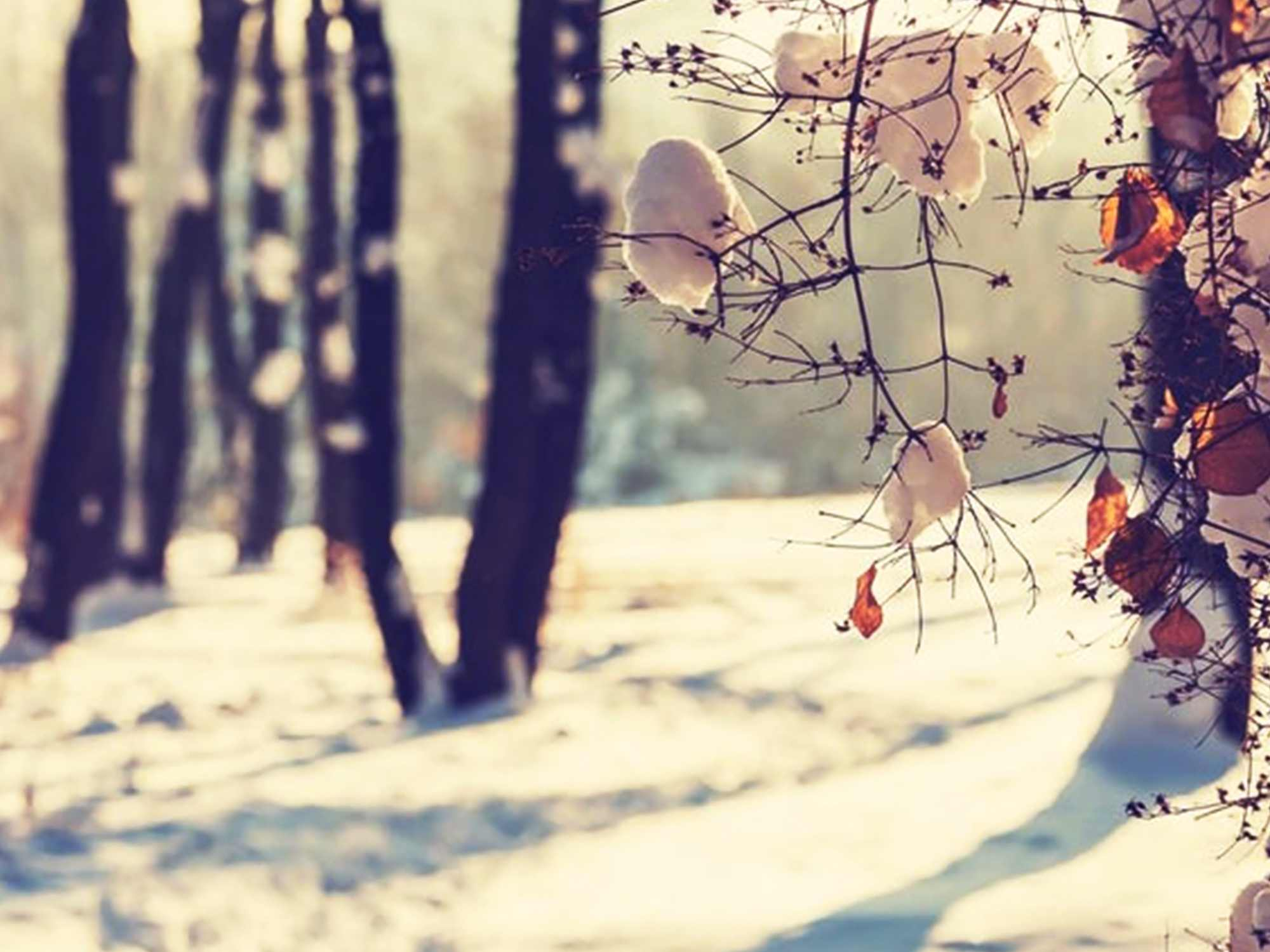 The Most Awaited Winter Season is Here!
